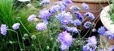 Top 10 bylin wieloletnich najdłużej kwitnących - Roslinowo.pl Plants, Blog, Gardening, Tops, Lawn And Garden, Blogging, Plant, Planets, Horticulture