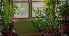 House Plants that clean the air and are nearly impossible to kill!