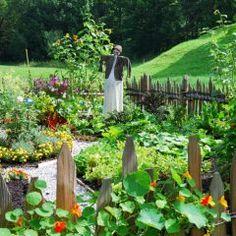 Mischkultur - Ratgeber für die praktische Umsetzung im Garten