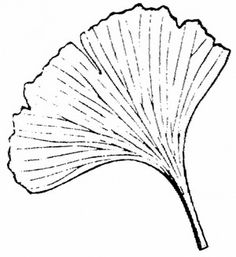 111 best ginkgo leaves images on pinterest leaves art nouveau and