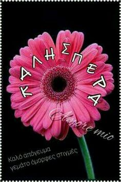 Good Afternoon, Good Morning, Greek Quotes, Tree Branches, Art Pieces, How To Make, Jewelry, Cartoons, Messages