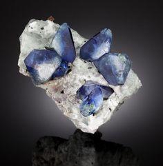 Minerals:Small Cabinet, BENITOITE with JOAQUINITE and NEPTUNITE. Dallas Gem Mine(Benitoite Mine; Benitoite Gem Mine), New Idria District, Di...