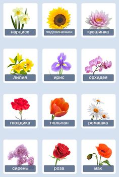 Цветы - Flowers Learn Russian, Learn English, Flower Crafts, Flower Art, Russian Lessons, Russian Language Learning, Flower Names, English Vocabulary, School Projects