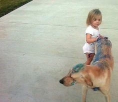 Cute Kids Caught Doing Funny Things photos) Funny Pictures For Kids, Funny Animal Pictures, Funny Kids, Funny Images, Funny Photos, Cute Kids, Funny Animals, Cute Animals, It's Funny