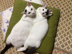 里親さんブログチェリーちゃんamp;ハーブくんの幸せ通信 - http://iyaiya.jp/cat/archives/79972