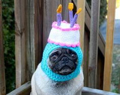 Bildergebnis für Happy Birthday Funny Dog Pictures