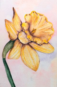Yellow Daffodil Watercolor Painting 4x6 white flower by esmallart