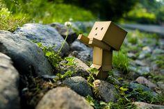 Danbo, el personaje de cartón que ha conquistado Flickr
