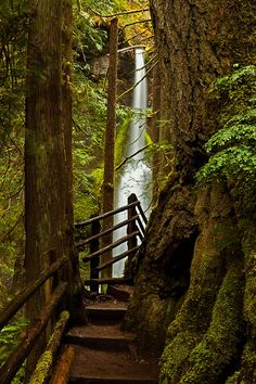 Maremeyer Falls, Olympic National Park, Washington