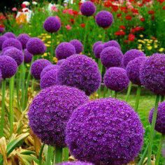 Purple spring flowers..beautiful