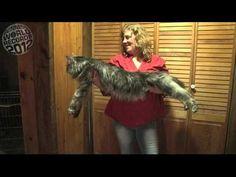 RECORD BREAKING: Meet The World's Longest Cat