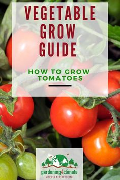 The best Tomato Growing Tips for growing all types of tomatoes. How to grow tomatoes from seeds or plants successfully! Types Of Tomatoes, Growing Tomatoes, Growing Vegetables, Gardening For Beginners, Gardening Tips, Pepper Plants, Patio Plants, Tomato Garden, Flowering Vines