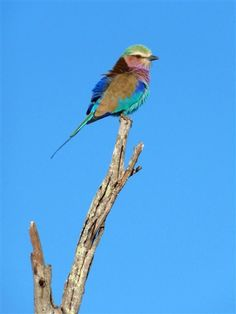 Nelson Jones shared this photo of a colorful bird on safari in Sabi Sands, Greater Kruger National Park. See more awesome photos: http://on.msnbc.com/Jq6bFO