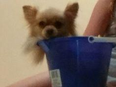 Little doggie in a bucket