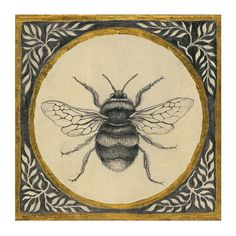 crayonnage   ᘠ  insecte abeille bee drawing illustration crayon pencil