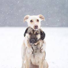 """A hug can keep you warm,"" writes @daily_doglife."