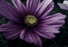 """""""Les parfums sont les sentiments des fleurs."""" #HHeine"""