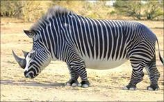 un rinoceronte y una cebra..:rinocebraa - cebrarino  ?¿