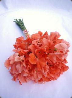 Ramo de novia de guisante de olor :: Sweet Pea wedding bouquet by Jay Archer Floral Design
