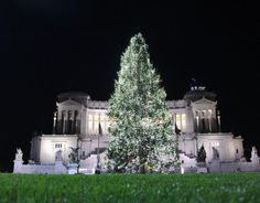 The Christmas tree erected in Piazza Venezia in front of the Monument to Victor Emmanuel II. 8 December 2012.