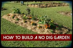 How To Build a No Dig Garden, gardening, survival, homesteading, vegetables, garden, food, how to,