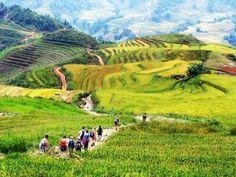Wandelen in Vietnam http://www.naturescanner.nl/azie/vietnam/activiteiten/wandelen-in-vietnam/305