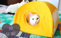 Turn an Old T-Shirt into a DIY Cat Tent