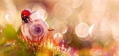 """""""La fotografía me ha hecho consciente de la belleza de la naturaleza: es como un paraíso de cuento de hadas, lleno de colores y vida. He aprendido a ver cosas que antes eran invisibles, como cuando un insecto se funde con una flor y ambos brillan como diamantes con los primeros rayos de sol. Es un verdadero espectáculo, eso sí, no para dormilones:  en verano estoy en mi jardín desde las 4 am""""."""