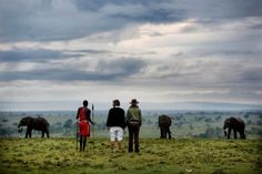 Want to experience the best that Kenya and Tanzania have to offer? Check out our 'Highlights' safari!