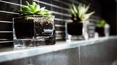 The Block Glasshouse Outdoor Plants, Indoor Outdoor, The Block Glasshouse, Backyard Creations, Inside Outside, Glass House, Flower Power, Home Furnishings, Home Accessories