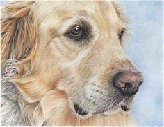 Wildlife & Pet Fine Art Sketchbook by Tara Tiberio: Golden Retriever Color Pencil Drawing ~ Finished