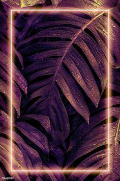 Iphone Wallpaper Photos, Colourful Wallpaper Iphone, Framed Wallpaper, Flower Background Wallpaper, Flower Phone Wallpaper, Neon Wallpaper, Butterfly Wallpaper, Cute Wallpaper Backgrounds, Pretty Wallpapers