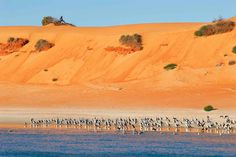 Shark Bay - Western Australia - photo Dan Paris
