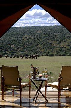 The Elephant Camp - Victoria Falls, Zimbabwe ....Take me :)
