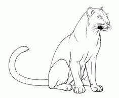 how to draw panthers, black panthers step 15