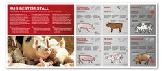 Schweine für die Erlebnistour  bei der VULCANO Schinkenmanufaktur Portfolio, Illustration, Shelter, Design, Animals, Nice Asses, Animais, Animales, Animaux