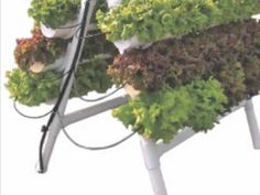 U-Gro Hydroponic Garden System,Imagine growing fresh food in your own backyard.