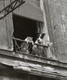 Dog and Cat in Paris by Annick Gérardin