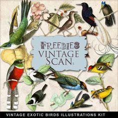 Freebies vintage Pájaros exóticos Ilustraciones