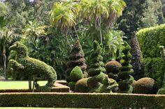 Mythical Hippocampus Topiary - Topiary Garden at Lotusland, Santa Barbara, CA
