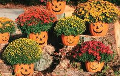 Great idea of putting Mums inside Pumpkins! Use Jack o lanterns or just plain pumpkins!