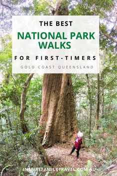 If you are new to bushwalking here is a list of the best Springbrook National Park Walks on the Gold Coast, Queensland. One of the best things to do on the Gold Coast is to visit the hinterland. Short walks, long hikes, beautiful waterfalls, amazing scenery, and perfect picnic locations is some of what you will find. #familytravel #queensland #australia #goldcoast Read the guide here! Australia Beach, Visit Australia, Queensland Australia, Australia Travel, Gold Coast Theme Parks, Gold Coast Queensland, National Parks Map, Natural Bridge, Beautiful Waterfalls