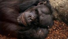 Chimbuka (1995-2011), Taronga Zoo