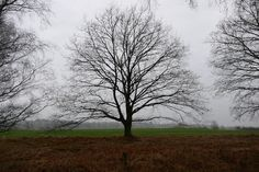 Behringer Heide, Richtungs Tuetsberg
