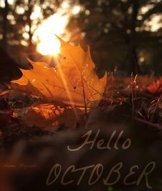 Hello October Month October Hello October Welcome October October Is Here |  Months And Days | Pinterest | Hello October