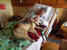A dying man's last wish, to see his dog. Something you'd see as a hospice nurse. Tears in my eyes~ dogs truly are a man's best friend Love My Dog, Puppy Love, Mans Best Friend, Best Friends, Friends Forever, Animals And Pets, Cute Animals, Amor Animal, Tier Fotos