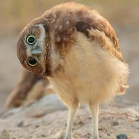 New Ideas For Photography Nature Animals Friends Cute Birds, Pretty Birds, Cute Owl, Beautiful Owl, Animals Beautiful, Beautiful Pictures, Animals Amazing, Cute Baby Animals, Funny Animals