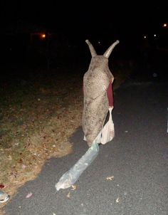Awesome Halloween costume - slug with slime trail!