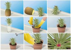 Grow your own pineapple - The Montessori Notebook