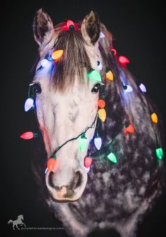 Diy Christmas Photoshoot Pets New Ideas All The Pretty Horses, Beautiful Horses, Animals Beautiful, Cute Horse Pictures, Horse Photos, Tiny Horses, Cute Horses, Christmas Horses, Christmas Animals